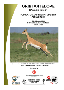 oribi antelope - Conservation Breeding Specialist Group
