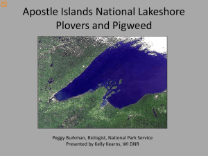 Apostle Islands National Lakeshore Plovers and Pigweed
