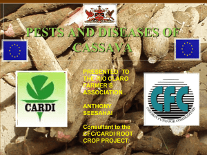 pests and diseases of cassava