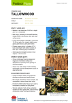 Paddock Plants fact sheet: Tallowwood