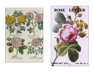 February 2016 - The Heritage Roses Group