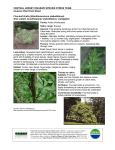Invasive Plants Fact Sheet - Friends of Hopewell Valley Open Space
