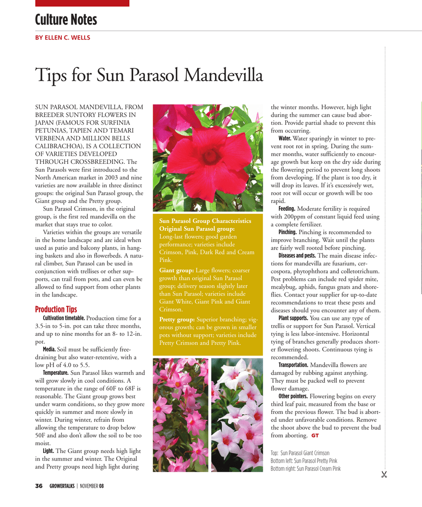 Tips For Sun Parasol Mandevilla