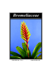 Mar – Apr 2007 - Bromeliad Society of Queensland