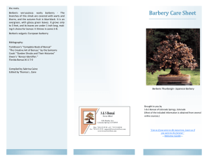 Barbery Care Sheet