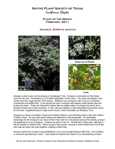 Anaqua - Native Plant Society of Texas