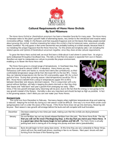 Cultural Requirements of Hono Hono Orchids By Scot Mitamura