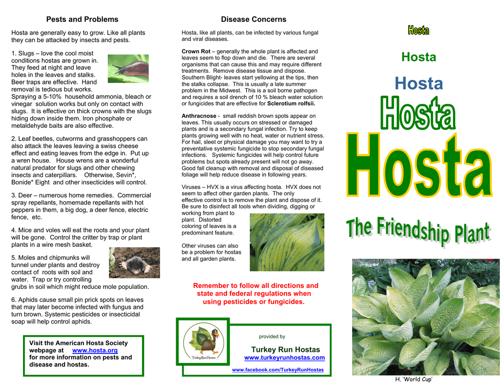 To View And Print The Tri Fold Brochure On Growing Hostas