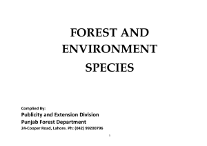 Forest and Environmental Species