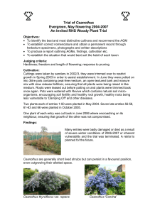 Trial of Ceanothus - Royal Horticultural Society