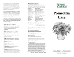 Poinsettia Care - Extension Store