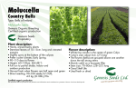 Moluccella - Genesis Seeds Ltd.