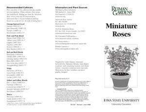 Miniature Roses - Extension Store