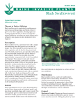 Black Swallowwort - Cooperative Extension