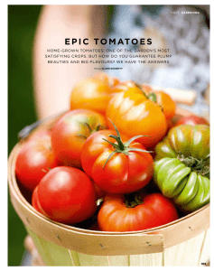 epic tomatoes - Clare Gogerty