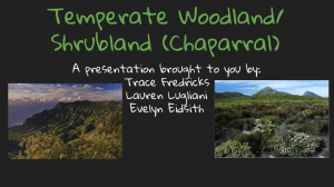 Temperate Woodland/ Shrubland (Chaparral)