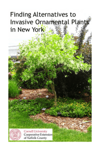 Finding Alternatives to Invasive Ornamental Plants in New York