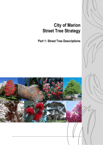 City of Marion Street Tree Strategy