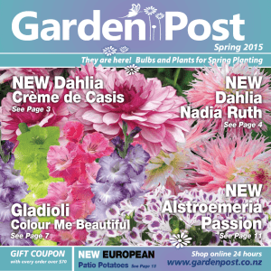 NEW Alstroemeria Passion NEW NEW Dahlia Gladioli
