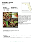 Phyllanthus fluitans - Florida Natural Areas Inventory