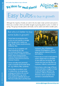 Easy Bulbs to buy in Growth