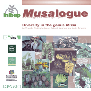 Musalogue: Diversity in the genus Musa