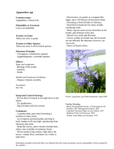 Agapanthus spp - Australian Weeds and Livestock