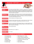 RUSSIAN TORTOISE care sheet
