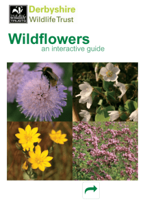 Wildflowers - Derbyshire Wildlife Trust