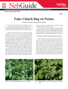 False Chinch Bug on Potato - University of Nebraska–Lincoln
