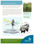 Photosynthesis - Oregon Forest Resources Institute