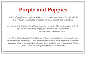 A field of purple and poppies symbolizes sleep and remembrance