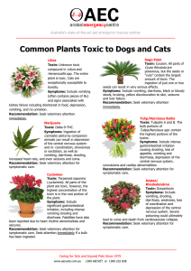 Common Plants Toxic to Dogs and Cats