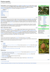 Pachira aquatica - Wikipedia, the free encyclopedia
