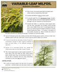 our Flyer - Pierce County Noxious Weed Control Board
