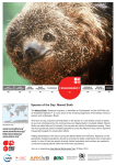 Species of the Day: Maned Sloth