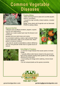 Common Vegetable Diseases