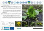 Lysichiton americanus factsheet - Q-bank