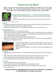 Poison Ivy Fact Sheet
