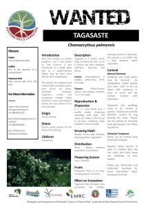Tagasaste - Blackwood Basin Group