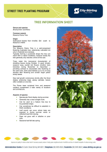 TREE INFORMATION SHEET