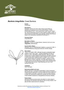 Fact sheet - Banksia integrifolia / Coast Banksia