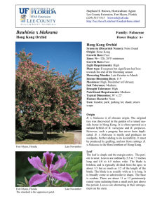 Bauhinia blakeana - Lee County Extension