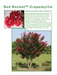 Red Rocket™ Crapemyrtle - Worthington Farms, Inc.