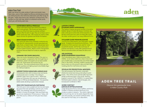 Aden Tree Trail Leaflet