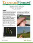 Nutsedge and Kyllinga Species - University of Tennessee Turfgrass
