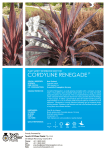 cordyline renegade - Touch of Class Plants