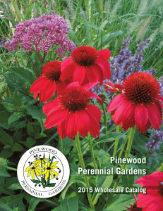 catalog without prices - Pinewood Perennial Gardens