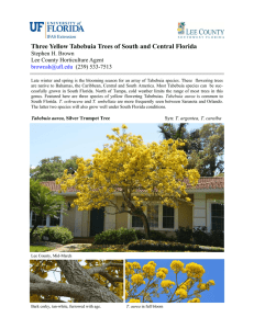 Three Yellow Tabebuia Trees of South and Central Florida