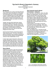 Figs Used for Bonsai in Queensland: a Summary
